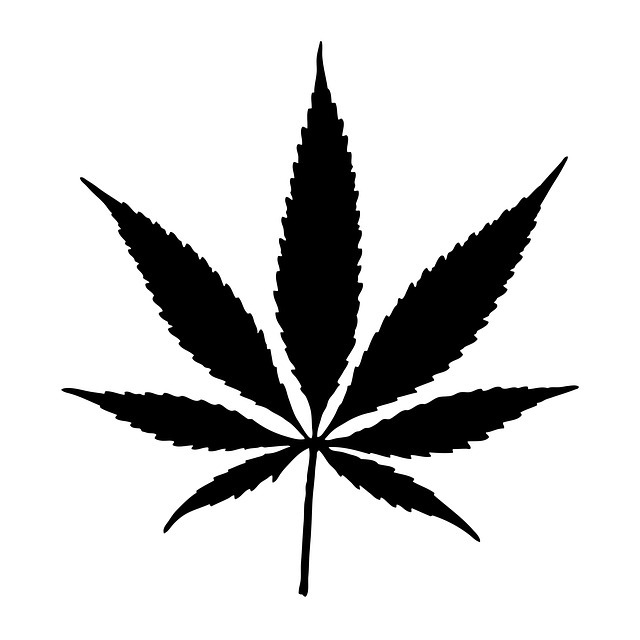 cannabis, pot, leaf