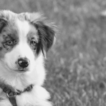 10 Keys To Finding A Pet Boarding Facility