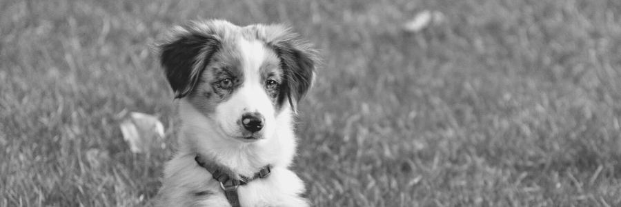 A brown and white dog sitting in the grass Description automatically generated