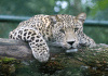 10 OF THE WORLD'S MOST ENDANGERED ANIMALS